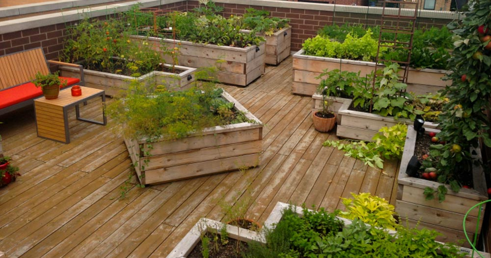 Tại sao bạn nên trồng rau trên sân thượng?