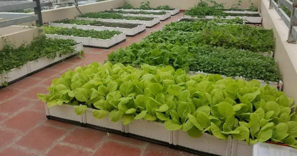 Top 7 thiết kế vườn rau trên sân thượng đẹp, dễ thực hiện